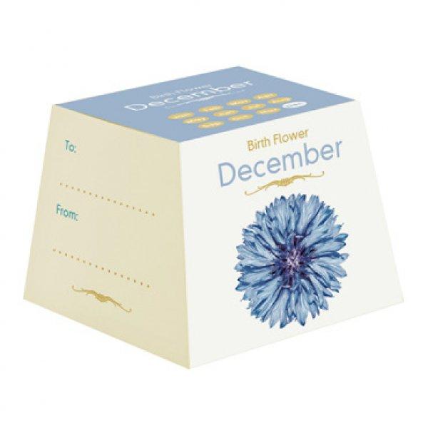 december birthday flower - HD827×1040