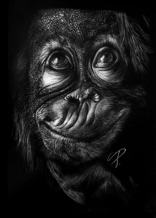 Bydlení a domácnost - Obraz na černém papíru - Opice