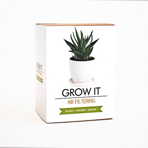 Bydlení a domácnost - Grow it - květina pro lepší vzduch