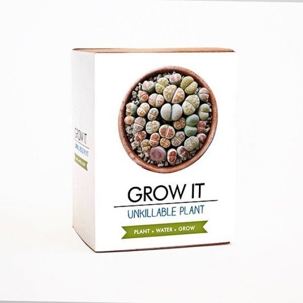 Bydlení a domácnost - Grow it - nezničitelná rostlina