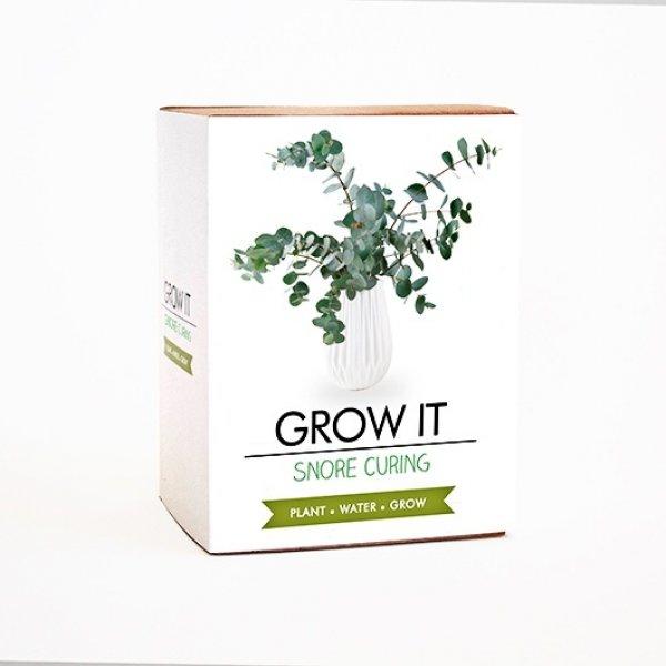 Bydlení a domácnost - Grow it - rostlinka proti chrápání