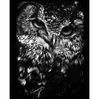Obraz na černém papíru - Sova