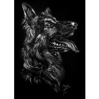 Obraz na černém papíru - Německý ovčák