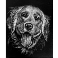 Obraz na černém papíru - Labrador