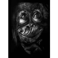 Obraz na černém papíru - Opice